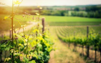 Вкус вина Alentejo — часть 1